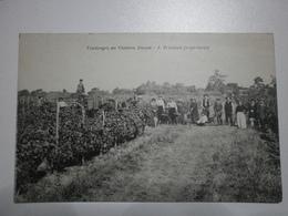 33 Saint Loubès. Vendanges Au Chateau Duzan (116) - France