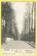 * Watermaal Bosvoorde - Watermael Boitsfort (Bruxelles) * (Nels, Série 11, Nr 726) La Drève Du Duc, Allée, Dreef, Rare - Watermael-Boitsfort - Watermaal-Bosvoorde