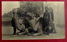 PHOTOGRAPHIE ARMEE INDIENNE MILITAIRES  CHAMEAU CHAMEAUX  - INDE - - Guerre, Militaire