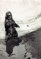 22 Photos Zoo Vintage Zoo De Vincennes Format 9/13 - Albums & Collections