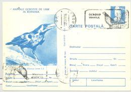BIRDS, RAVEN, KESTREL, PHEASANT SPECIAL POSTMARK, PC STATIONERY, ENTIER POSTAL, 1978, ROMANIA - Oiseaux