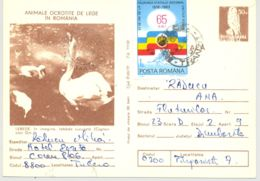BIRDS, SWANS, KESTREL, PC STATIONERY, ENTIER POSTAL, 1984, ROMANIA - Swans