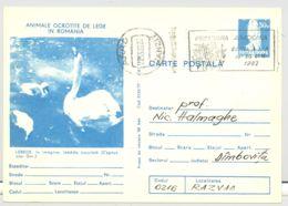 BIRDS, SWANS, KESTREL, PC STATIONERY, ENTIER POSTAL, 1982, ROMANIA - Swans