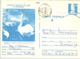 BIRDS, SWANS, KESTREL, PC STATIONERY, ENTIER POSTAL, 1980, ROMANIA - Swans