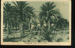 WD131 TRIPOLITANIA - OASI , CARICO DI DATTERI - Libia