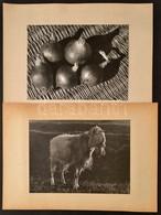 Hagyma Csendélet; Kecske, 2 Db Nagyméretű Fotó, Paszpartuban, Különböző Méretben - Other Collections