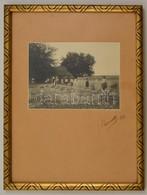 Aratók, Fotó, Kartonra Ragasztva, Jelzett, üvegezett Fa Keretben, 13×18 Cm - Autres Collections