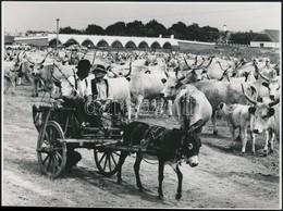 Cca 1960-1970 A Hortobágyi Hídivásár, Sajtófotó, Feliratozva, 18×24 Cm - Autres Collections