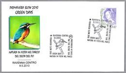 MARTIN PESCADOR. Alcedo Atthis. Ravenna 2010 - Oiseaux