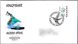 MARTIN PESCADOR - KINGFISHER - Alcedo Atthis. Birmingham 2011 - Oiseaux