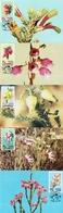 South Africa - 1994 Heathers Maxi Card Set # SG 859-863 , Mi 944-948 - Pflanzen Und Botanik