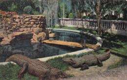 Texas El Paso Alligator Pool San Jacinto Plaza - El Paso
