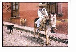 MEXIQUE, Vieil Homme Sur Son âne, Sombrero, Lasso, Chiens, Foto Jürgen Bavoni, Ed. Arcolris 1997 - Mexique