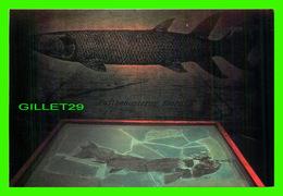 FISH, POISSONS - EUSTHENOPTERON FOORDI - PARC DE MIGUASHA - - Poissons Et Crustacés