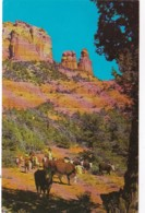 Arizona Oak Creek Canyon Cattle Scene - United States