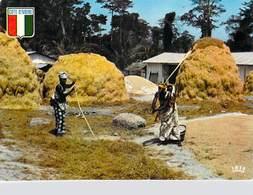 Afrique-CÔTE D'IVOIRE  Battage Du Riz Rice Threshing ( Agence Ivoirienne Cliché Chareton 7524)*PRIX FIXE - Côte-d'Ivoire