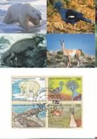 UNO GENF, 305-308 MC, Maximumkarte 48, Gefährdete Arten 1997 - Maximumkarten