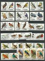 Aitutaki 1981 Birds Fauna Set Of 36v MNH - Oiseaux