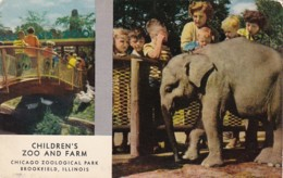 Illinois Chicago Children's Zoo Baby Elephant Chicago Zoological Park At Brookfield 1955 - Chicago
