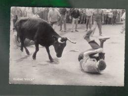 CP (64) Courses De Vaches Aux Fêtes De Bayonne - Photo Aubert Bayonne - Bayonne