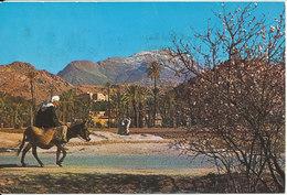 Morocco Postcard Sent To Denmark 1978 - Morocco