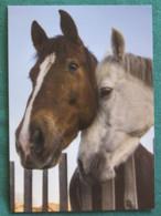 Sweden Postcard Horses - Suède