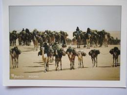 Niger Azalai Entre Bilma Et Fachi Chameaux - Niger
