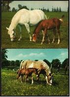 2 X Pferde Auf Der Wiese  -  Mit Fohlen -  Ansichtskarten  Ca. 1980   (9310) - Pferde