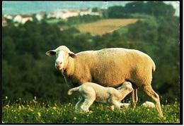 Mutterschaf Mit Lamm  -  Deutsche Jugendherberge DJH  -  Ca. 1975   (9383) - Tierwelt & Fauna