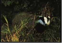 Dachs  -  Deutsche Jugendherberge DJH  -  Ca. 1975   (9382) - Tierwelt & Fauna