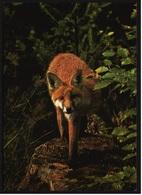 Fuchs  -  Deutsche Jugendherberge DJH  -  Ca. 1975   (9385) - Tierwelt & Fauna