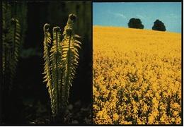 Farn Im Frühling  /  Rapsfeld Bei Ratzeburg  -  DJH / Deutsche Jugend Herberge  -  2 Ansichtskarten Ca. 1983    (9372) - Botanik