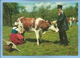 """Groupe De Pont-d'Ouilly (14) La Traite D'une Vache """"Blaudes Et Coëffes"""" 2 Scans Coiffe Joug Tonneau - Pont D'Ouilly"""