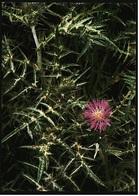 Distelblüte  -  DJH / Deutsche Jugend Herberge  -  Ansichtskarte Ca. 1975    (9387) - Blumen