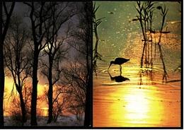 2 X Abendsonne : Mit Unterschnepfe Und Im Winter Am Bodensee  -  DJH Ca. 1970 / 1981  (9379) - Ansichtskarten