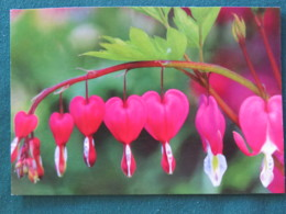 "Argentina 2016 Postcard ""flowers"" To Nicaragua (inside Letter) - Argentine"