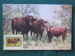 "South Africa 1991 FDC Stationery Maxicard ""cows - Bonsmara"" - Afrique Du Sud"