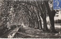 19 - BRIVE - Les Allées Et Le Canal - Brive La Gaillarde