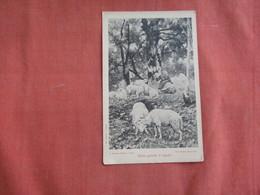 Goats  ??  Ref 3100 - Animals