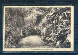 REUNION - 20 - CILAOS - Le Chemin Des Bains (Amphoux)       (ref A7) - La Réunion