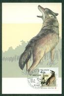 CM-Carte Maximum Card # Croatie-Croatia  1994 # Fauna :Loup,Wolf,vuk ( 1 MC ) - Croatie