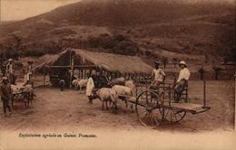 Exploitation Agricole En Guinée Française - Guinée Française