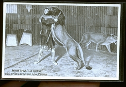 MARTHA LA CORSE             JLM - Cirque