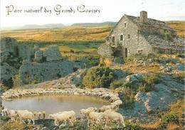 Animaux - Moutons - Parc Naturel Des Grands Causses - 1 Timbre Philatélique Au Verso- Voir Scan - Cpm - écrite - - Animali