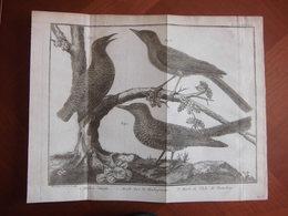 """Réunion Bourbon : Document De 1760 Par Brisson Et Martinet Avec Trois Oiseaux Dont  """" Merle De L'Isle De Bourbon """" - Documents Historiques"""
