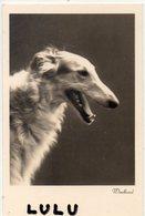 ANIMAUX 109 : Windhund Lévrier Afgan ( Chien )  édit. Amag 67506/2 - Hunde