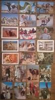 Lot De 23 Cartes Postales / Personnages D' AFRIQUE / TUNISIE - Tunisie