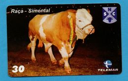 BRASIL- Cows - BULL - Cows