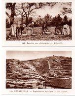 Lot De 2 Images Photos Régionales. Le Massif Central. Le Houillères De Decazeville, Récolte Des Châtaignes En Limousin. - Vieux Papiers