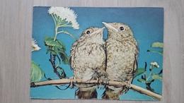 Ansichtskarte - Motiv Vögel - Gartenrotschwanz - Vögel